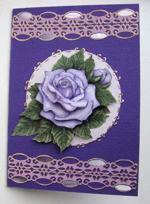Paarse roos met randsticker